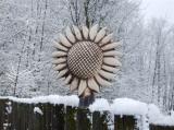Plotovka - slunečnice