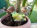 Kypřítko žába
