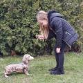 Soška pes - jezevčík hnědý