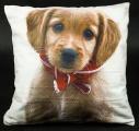 Povlak na polštář - hnědý pes