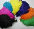 Pštrosí pero 30 - 35 cm - barevné