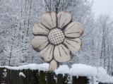 Plotovka - květ