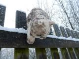 Plotovka - kočka lezoucí dolů