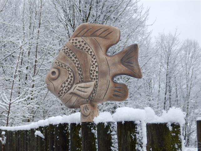 Plotovka - rybka skalára