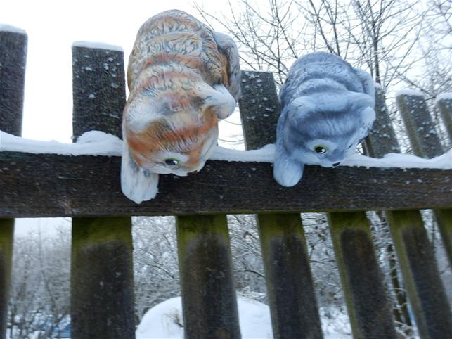 Plotovka kočka lezící dolů