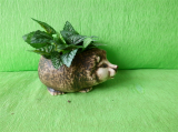 Keramický květináč mini ježek