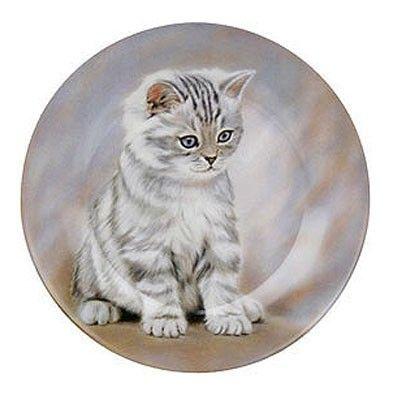 Talířek Tygrované kotě