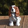 Soška pes - Kavalír King Charles Španěl