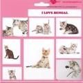 SAMOLEPKY BENGAL - kočka bengálská