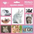 SAMOLEPKY MAINE COON - kočka mainská mývalí