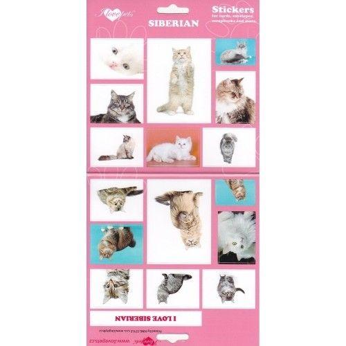 SAMOLEPKY SIBERIAN - kočka sibiřská