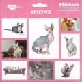 SAMOLEPKY SPHYNX - kočka Sphynx